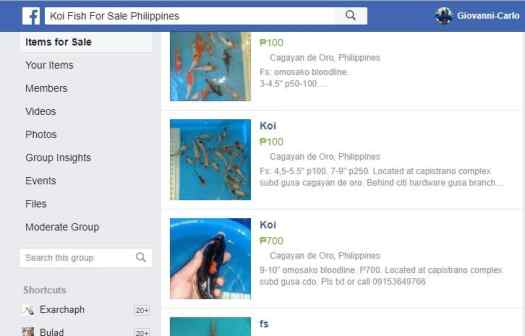 where to buy koi fish in the philippines
