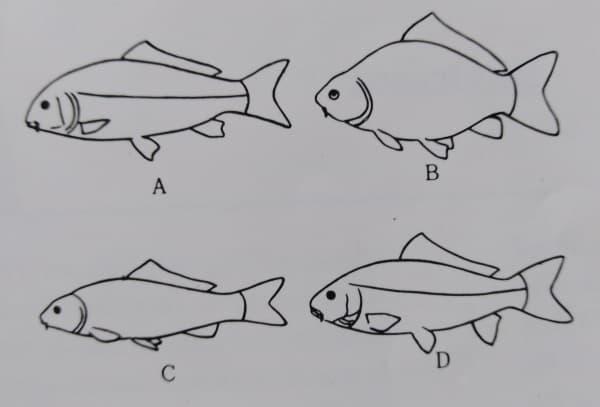 koi fish anatomy kind and form of koi