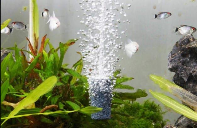 aquarium aeration
