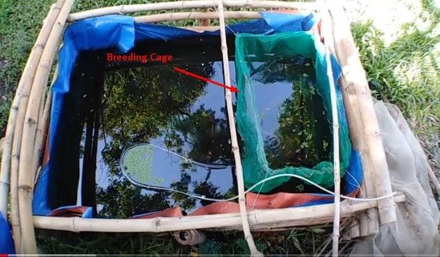breeding tank and breeding cage