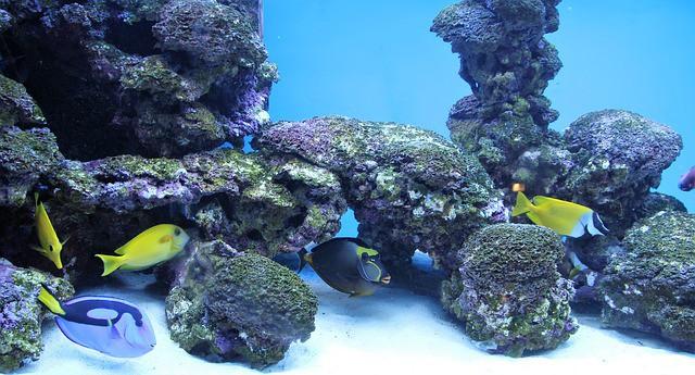 fun saltwater aquarium