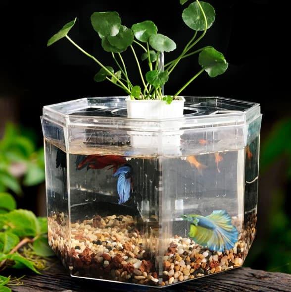 how to clean acrylic aquarium