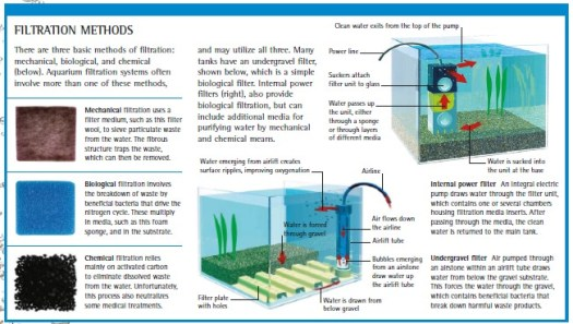 simple guide to aquarium filtration filtration methods