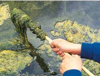 how to keep a koi pond clean