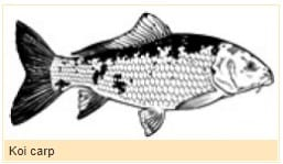 invasive freshwater fish