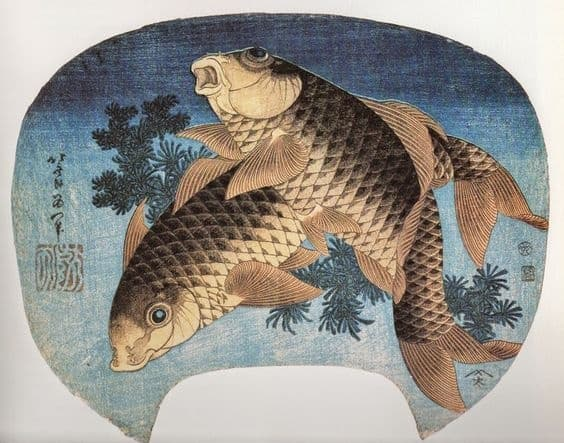 koi fish in japanese culture