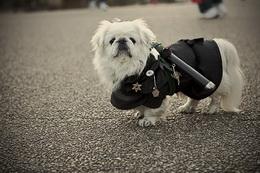 cani e padroni di cani