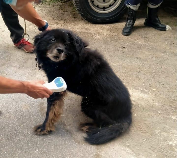 """Marino, salvato un cane grazie all'operazione """"Ciotola vuota"""""""