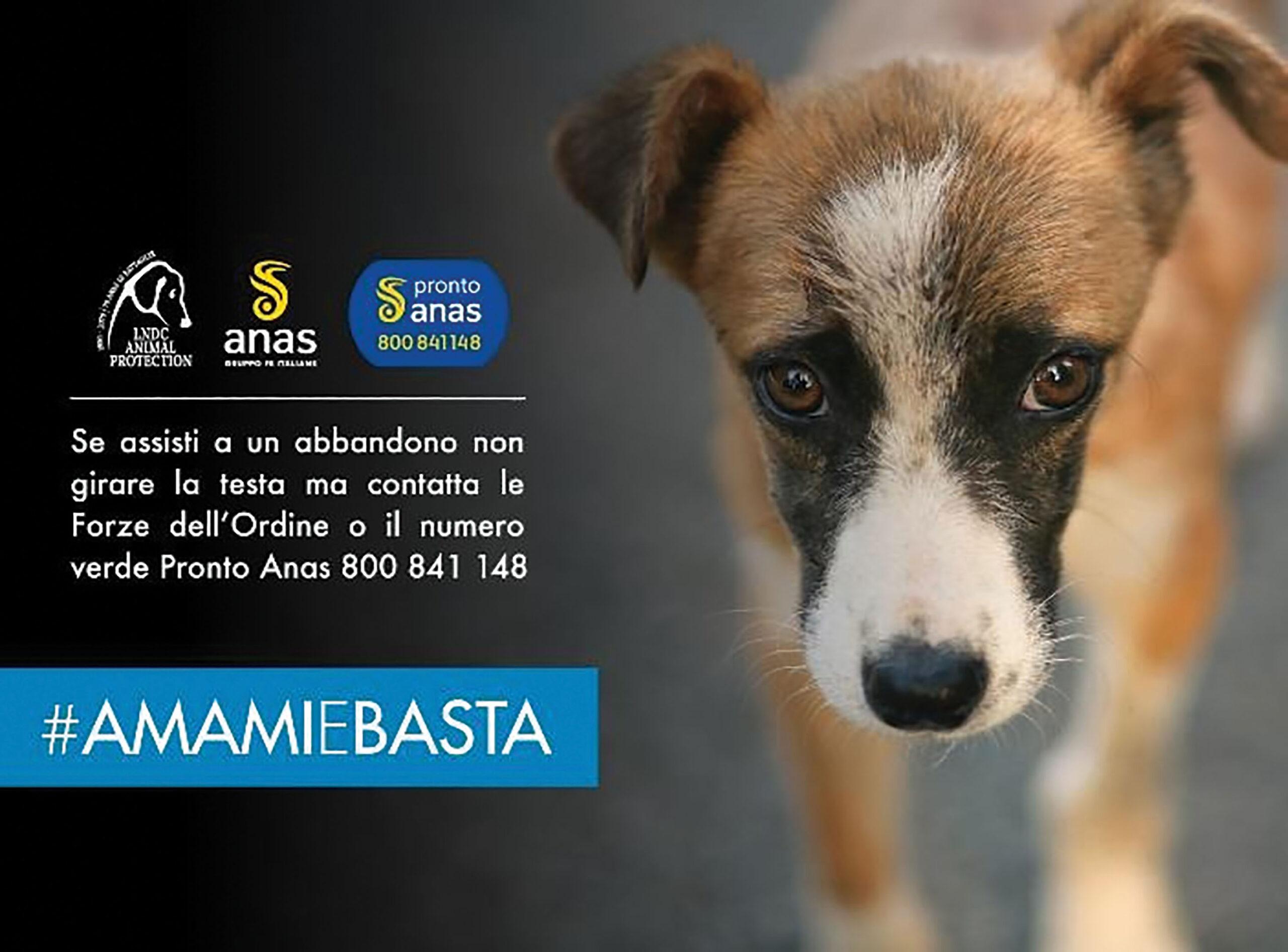 Cani e gatti, incidenti provocati dall'abbandono: parte la campagna estiva LNDC e ANAS