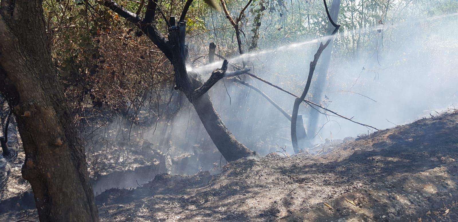 Lanuvio, incendio sulla scarpata ferroviaria, tratta interrotta per ore