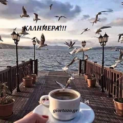 καφές γλάροι