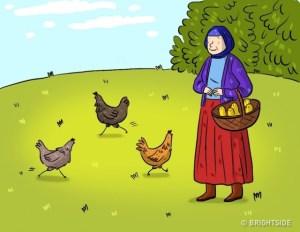 ΤΕΣΤ Κοτόπουλα και αυγά
