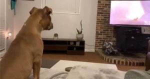 Σκύλος Παρακολουθεί Τον «Βασιλιά Των Λιονταριών» Και Κλαίει Όταν Πεθαίνει Ο Μπαμπάς Του Σίμπα (Video)