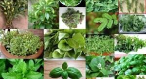Βότανα και οι θεραπευτικές τους ιδιότητες μέσα από έναν εύχρηστο αλφαβητικό κατάλογο των βοτάνων της ελληνικής φύσης!