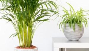 Read more about the article 6 Φυτά που θα Καθαρίσουν τον Αέρα του Σπιτιού σας Αυτή την Άνοιξη