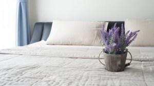 Φυτά εσωτερικού χώρου που εγγυώνται καλύτερο ύπνο