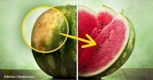 Έτσι θα διαλέξετε εύκολα το καλύτερο καρπούζι
