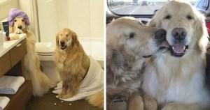 Ένας Τυφλός Σκύλος Έχει Για Οδηγό Μια Σκυλίτσα Που Είναι Πάντα Δίπλα Του – Πραγματικά Υπέροχες Εικόνες