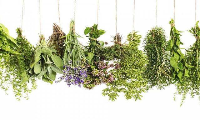 Βότανα: Κήπος των θαυμάτων του Ιπποκράτη