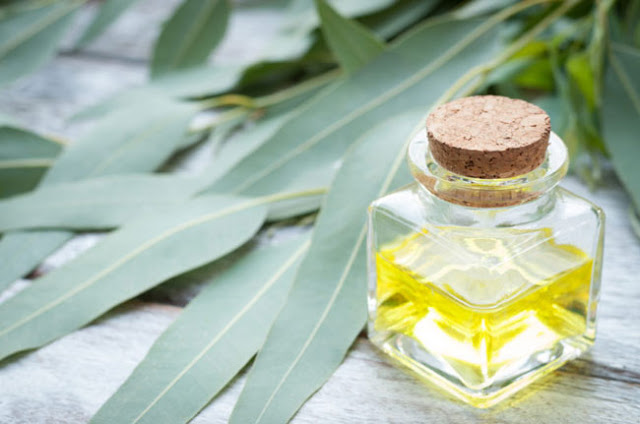 9 Θαυματουργά βότανα που αποκαθιστούν τις βλάβες στα πνευμόνια, καταπολεμούν τις λοιμώξεις και ενισχύουν τoν οργανισμό