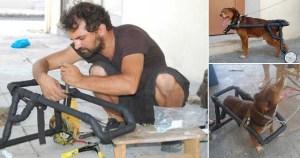 Ο Έλληνας υδραυλικός που κάνει ανάπηρα σκυλάκια να ξαναπερπατήσουν