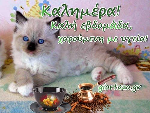 καλημέρα γατούλα