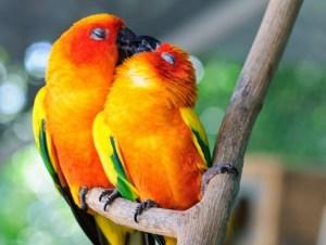 Read more about the article Φωτογραφίες ζώων που αποδεικνύουν πως η αγάπη βρίσκεται παντού!