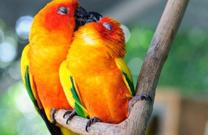 Φωτογραφίες ζώων που αποδεικνύουν πως η αγάπη βρίσκεται παντού