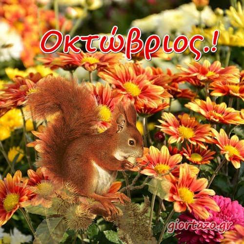 φθινοπωρινα φυλλα σκιουρος