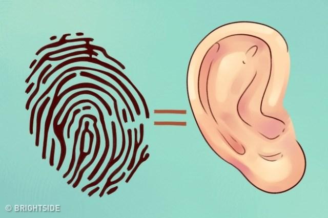Τι αποκαλύπτουν τα αφτιά σας