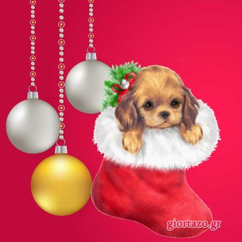 σκυλάκι μπάλες χριστουγεννιάτικες
