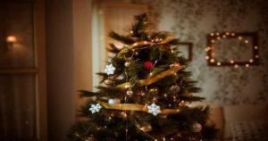 Read more about the article Τα ζώδια και οι γιορτές. Το χριστουγεννιάτικο δέντρο που ταιριάζει σε κάθε ζώδιο!