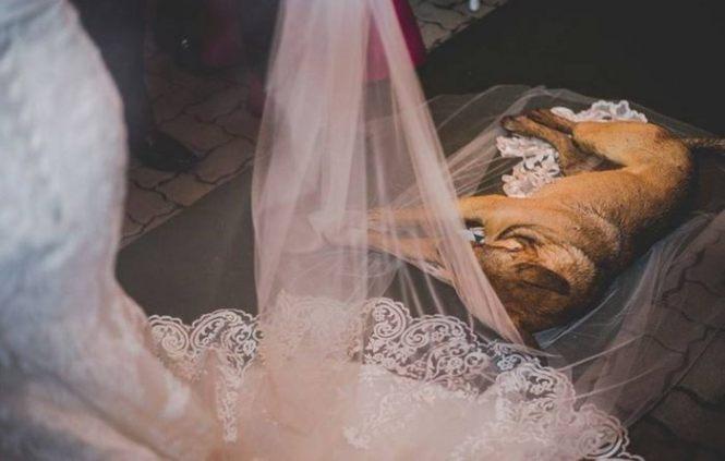 ένας απροσδόκητος επισκέπτης είχε περπατήσει μέσα και κοιμήθηκε στο πέπλο της νύφης