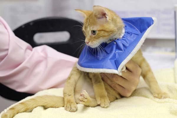 γατάκι γεννήθηκε με πίσω πόδια ανάποδα
