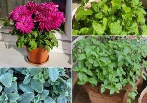 Read more about the article Σας ταλαιπωρούν τα κουνούπια; 15 Φυτά που Διώχνουν τα Κουνούπια και τα Έντομα