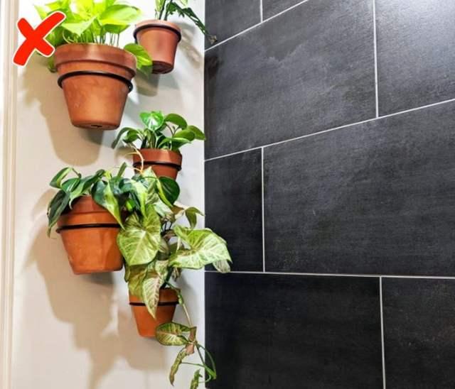 Φυτά στο μπάνιο
