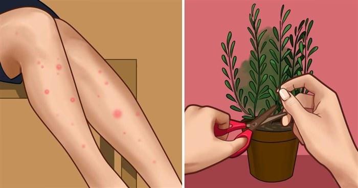 Read more about the article Όλα όσα πρέπει να γνωρίζετε για τα κουνούπια και πώς να τα κρατήσετε μακριά σας αυτό το καλοκαίρι