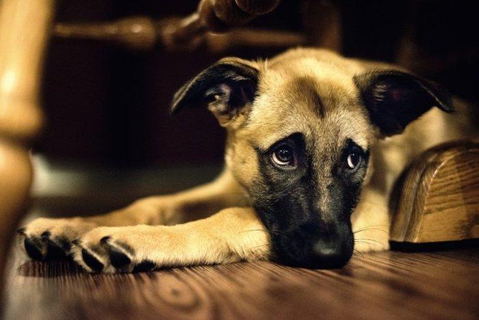 Read more about the article Τα 100 καλύτερα αποσπάσματα σκυλιών