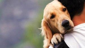 Read more about the article Πράγματα που μας διδάσκουν τα σκυλιά για τη ζωή & την αγάπη