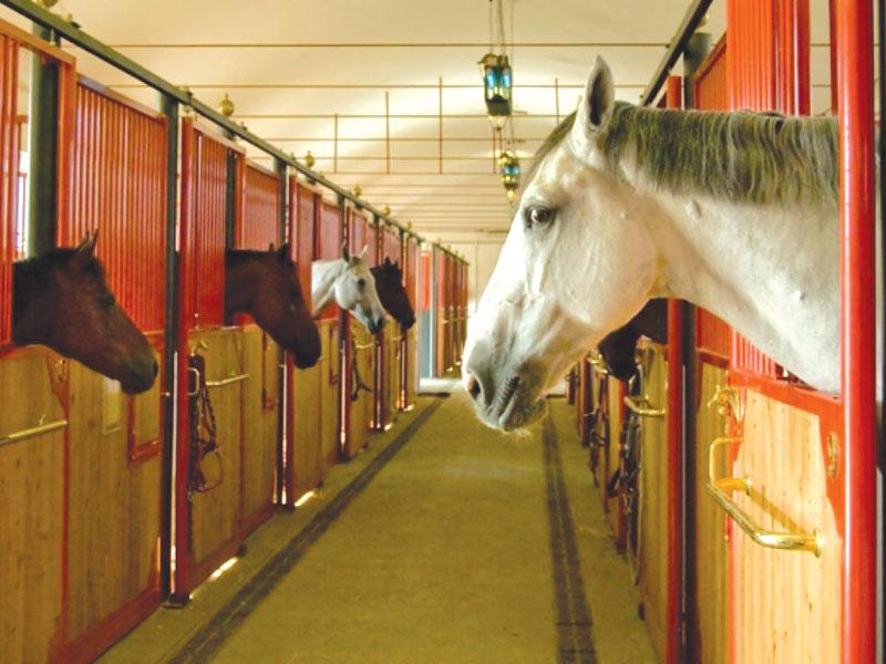 GG a cavallo in lombardia
