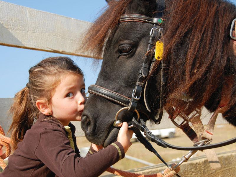 GG cavalli in piemonte