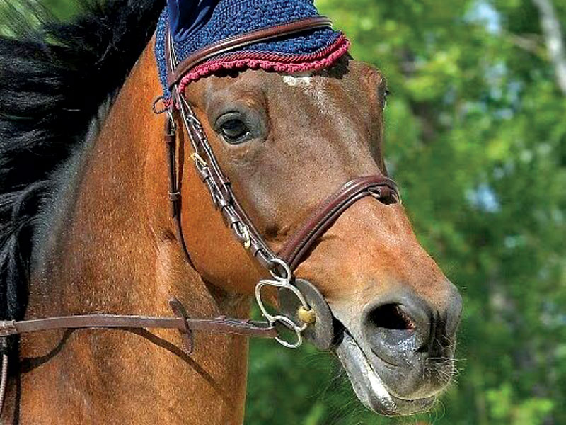 GG cavalli in piemonte1