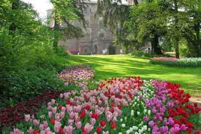 Messer Tulipano compie 20 anni e Centrale del Latte sostiene la fioritura