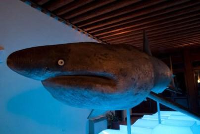 Museo della Laguna Sud e Museo G. Olivi - Chioggia (VE)