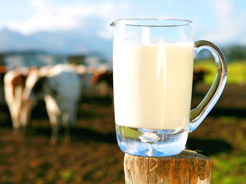 Latte vaccino italiano: una filiera sempre più controllata