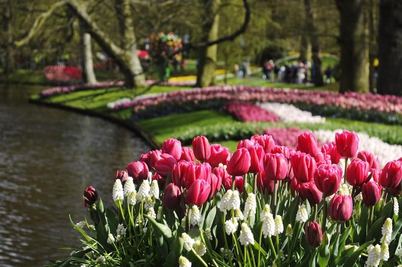 """Tulipani e altri giardini: la """"passeggiata"""" in virtual tour"""