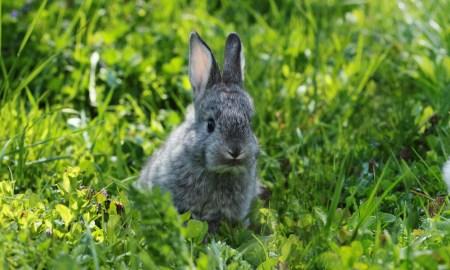Cosa fare se scappa un coniglio e altri dubbi legali