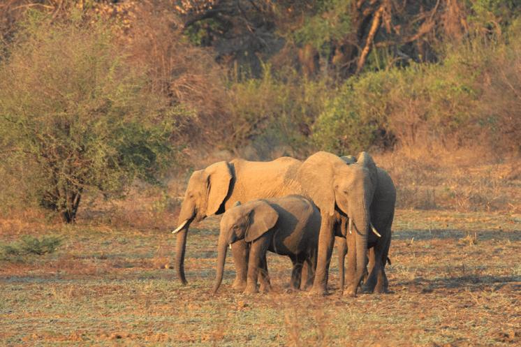Elefanten in der Nähe des Croc Valley Camps