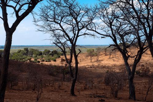 Blick über das Chobe Tal