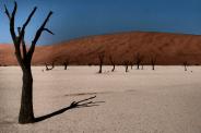 Kameldornbäume im Dead Vlei, Namibia